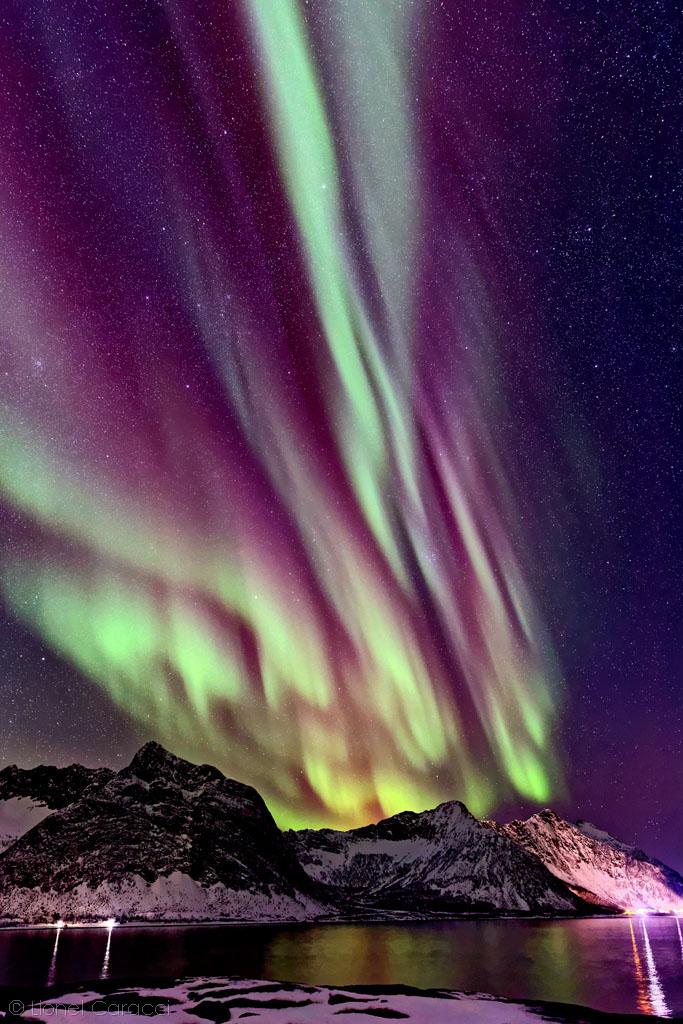 Aurora Medusa