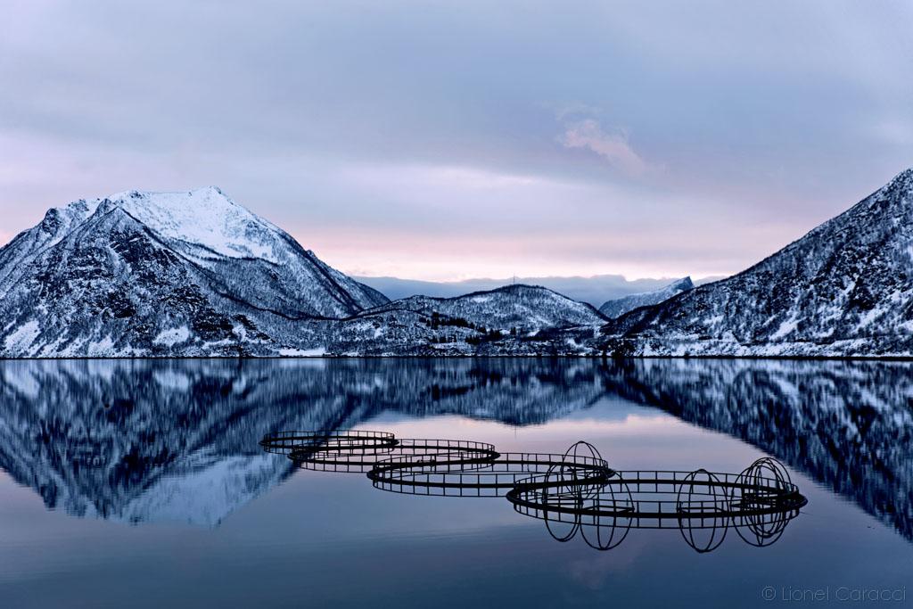 Saumon Norvégien